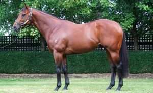 Magnus - sire of Perth Stakes winner The River