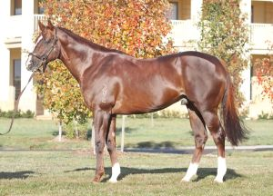 Woodside Park's leading Victorian sire Written Tycoon. He is also third on the leading Australian sires (by winners)