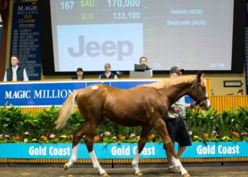 PHOTO:  Lauriston Thoroughbreds sold a Helmet – Skidoodle colt for $170,000