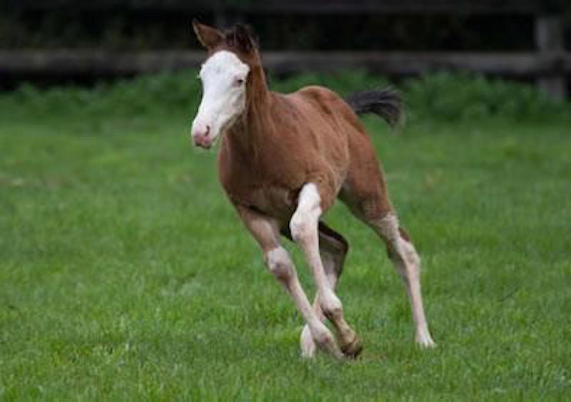 Miss Vista as a Glenfern Park foal