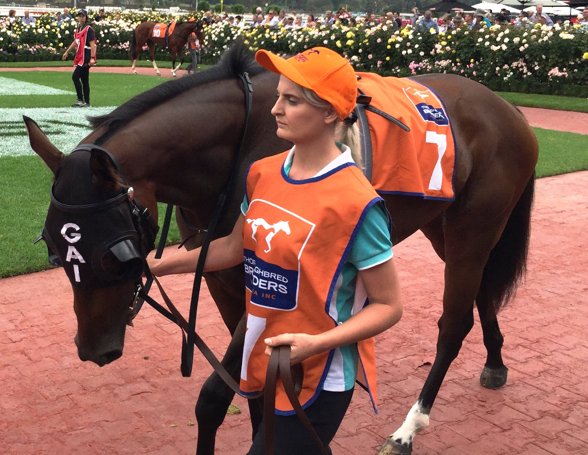 Thyme for Roses in the mounting yard pre-race
