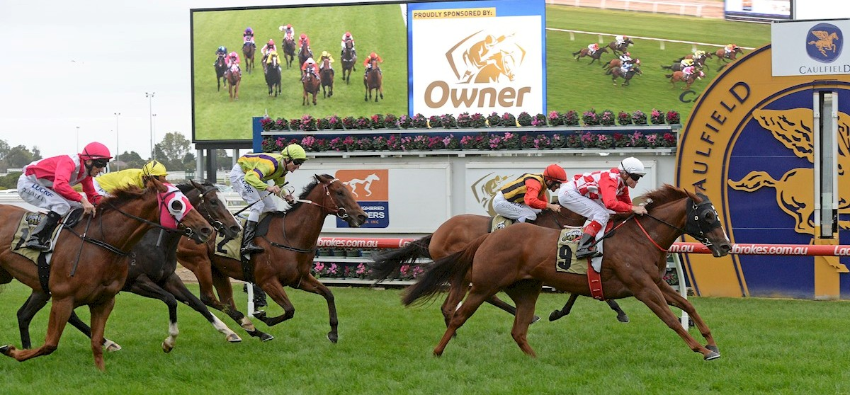 Miss Promiscuity fights off Jalan Jalan (inside) & The Quarterback (far left) to win the VOBIS Gold Sprint