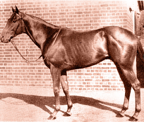 Dual Champion Australian sire Showdown stood at Stockwell for 17 seasons