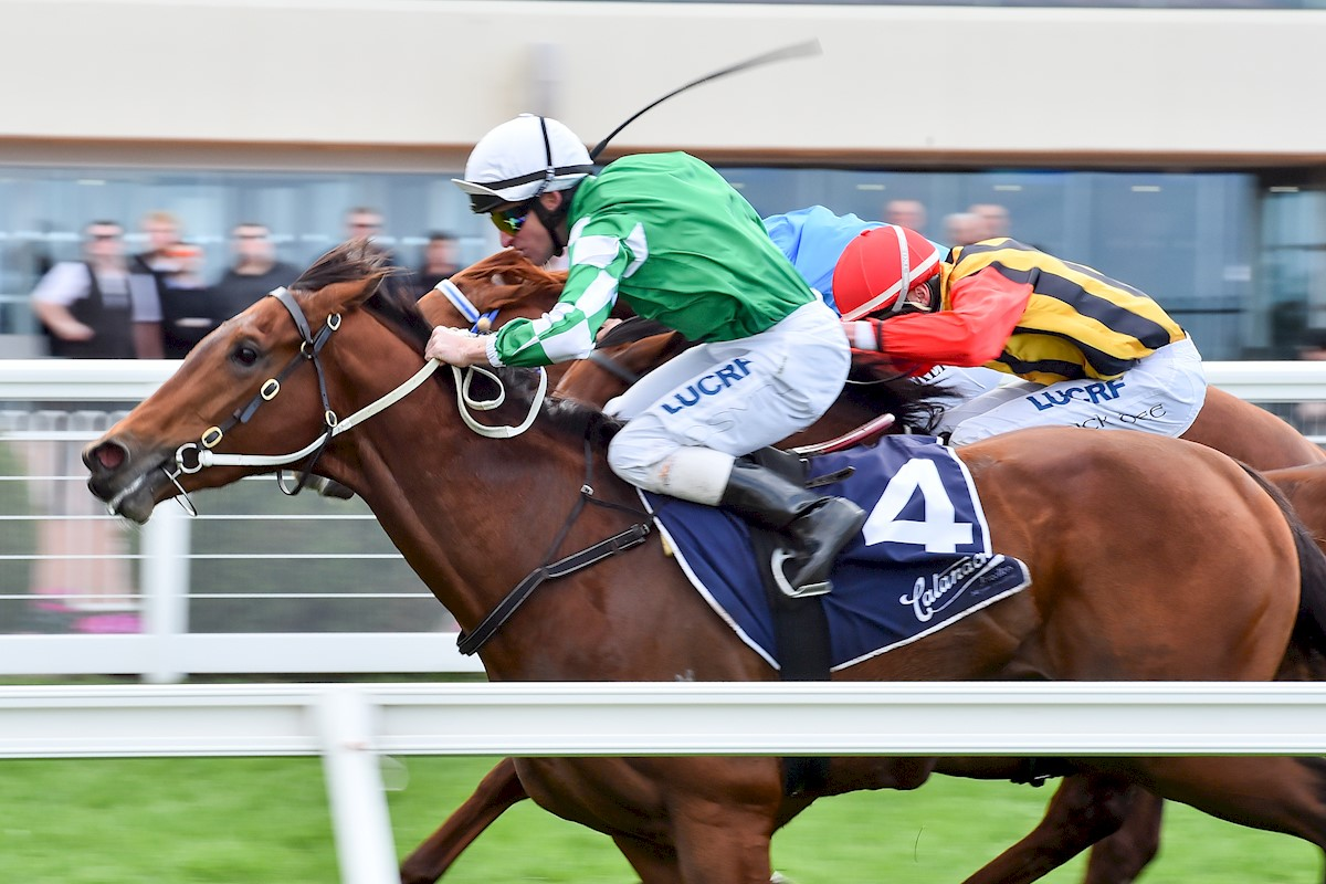 Yu Long Sheng Hui wins at Caulfield (John Donegan-Racing Photos)