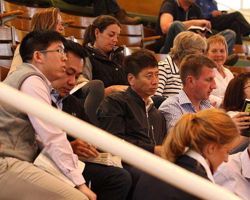Zhang Yueshang, owner of Yulong Investments, at Tattersalls
