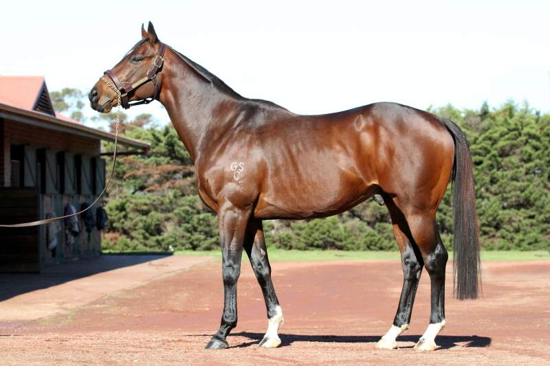 Rock Sturdy to stand at Stockwell Stud (Bruno Cannatelli)