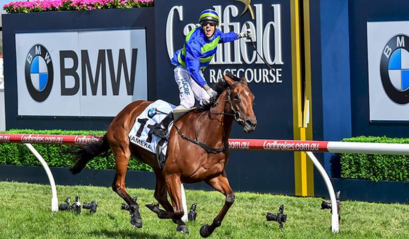 Jameka and Nick Hall win the Caulfield Cup (Racing Photos)