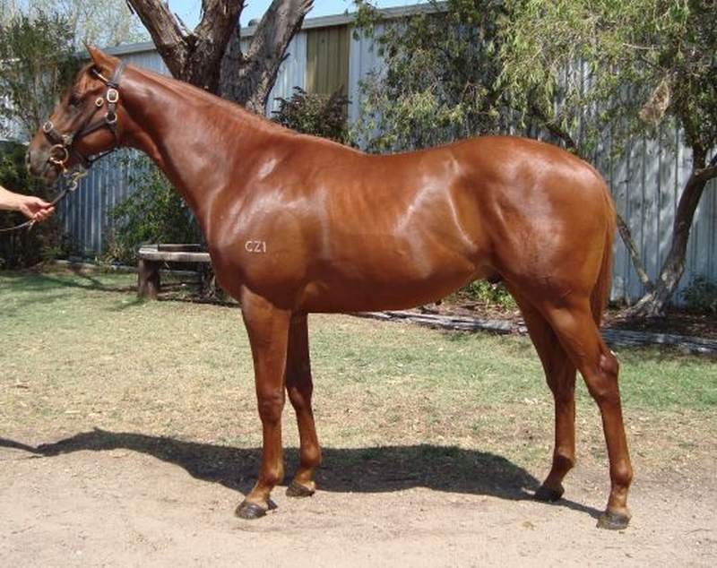 Golden Tomahawk as an Inglis Premier Sale yearling