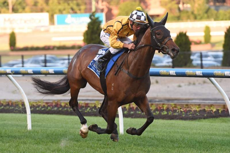 Mystified wins the Inglis 55 Sec Challenge at Moonee Valley (Brett Holburt-Racing Photos)