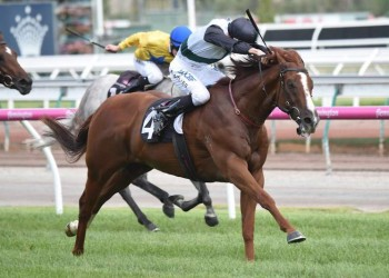 Grande Rosso wins the Chester Manifold Stakes (Brett Holburt-Racing Photos)