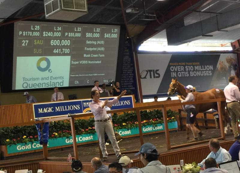 Musk Creek's Sebring colt and Jamie Ryder at Magic Millions