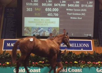 The Written Tycoon - Pearl Goddess colt sells for $650,000