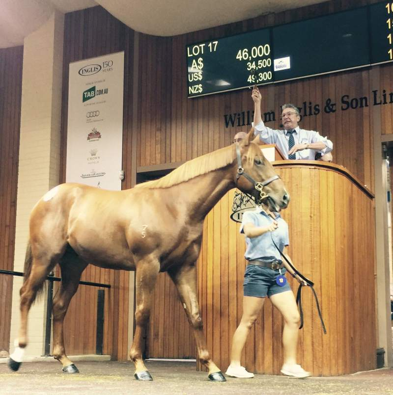 Inglis' Simon Vivian knocks down Bucklee Farm's Moshe colt to Gelagotis Racing for $46,000