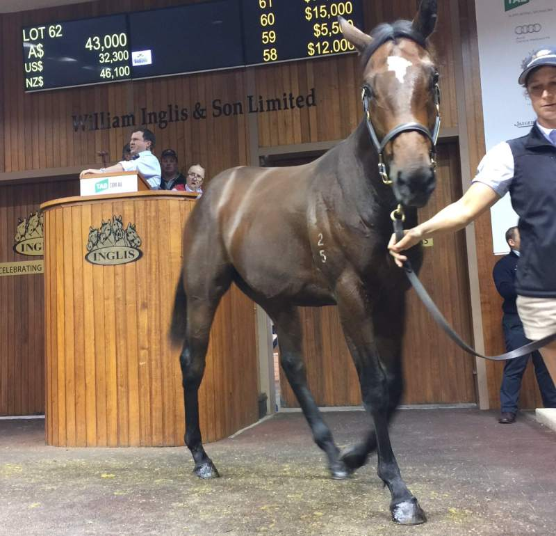 Moorookyle Park sold the first ever Warrior's Reward yearling in Australia bought for $43,000 by Waterford Bloodstock-Brooks Racing