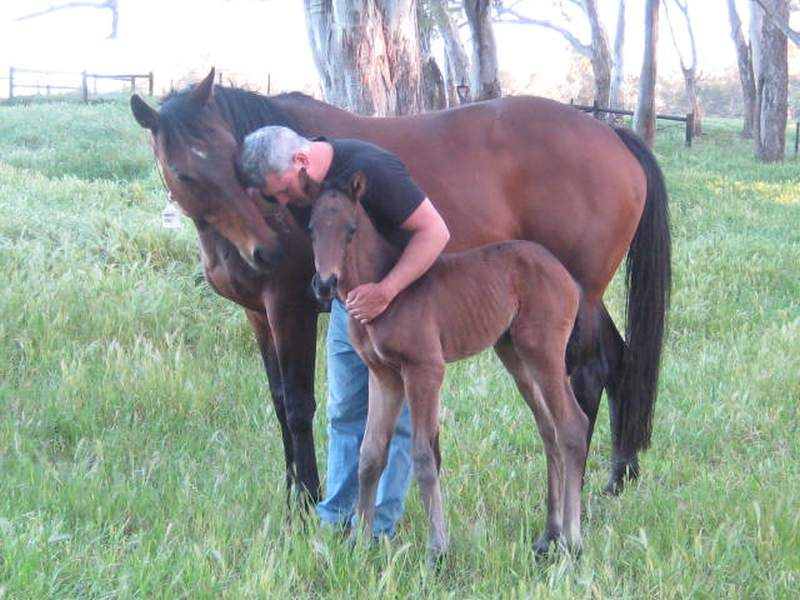 Day-old Gun Pit and dam Magic Tori at Grange Thoroughbreds with Gary Mudgway