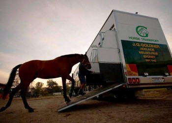 Goldners horse walking into truck