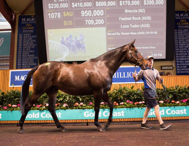 Jonathan Munz bought Breccia, dam of Tivaci, for $950,000 in foal to Brazen Beau (pic-Katrina Partridge)