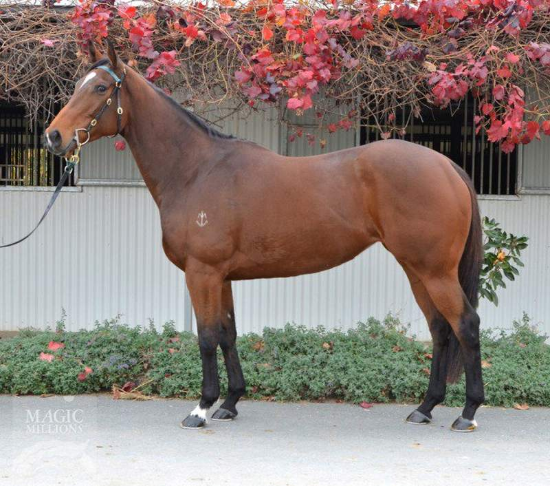Northwood based Seymour Bloodstock bought Mousai, a half sister to Starspangledbanner for $870,000