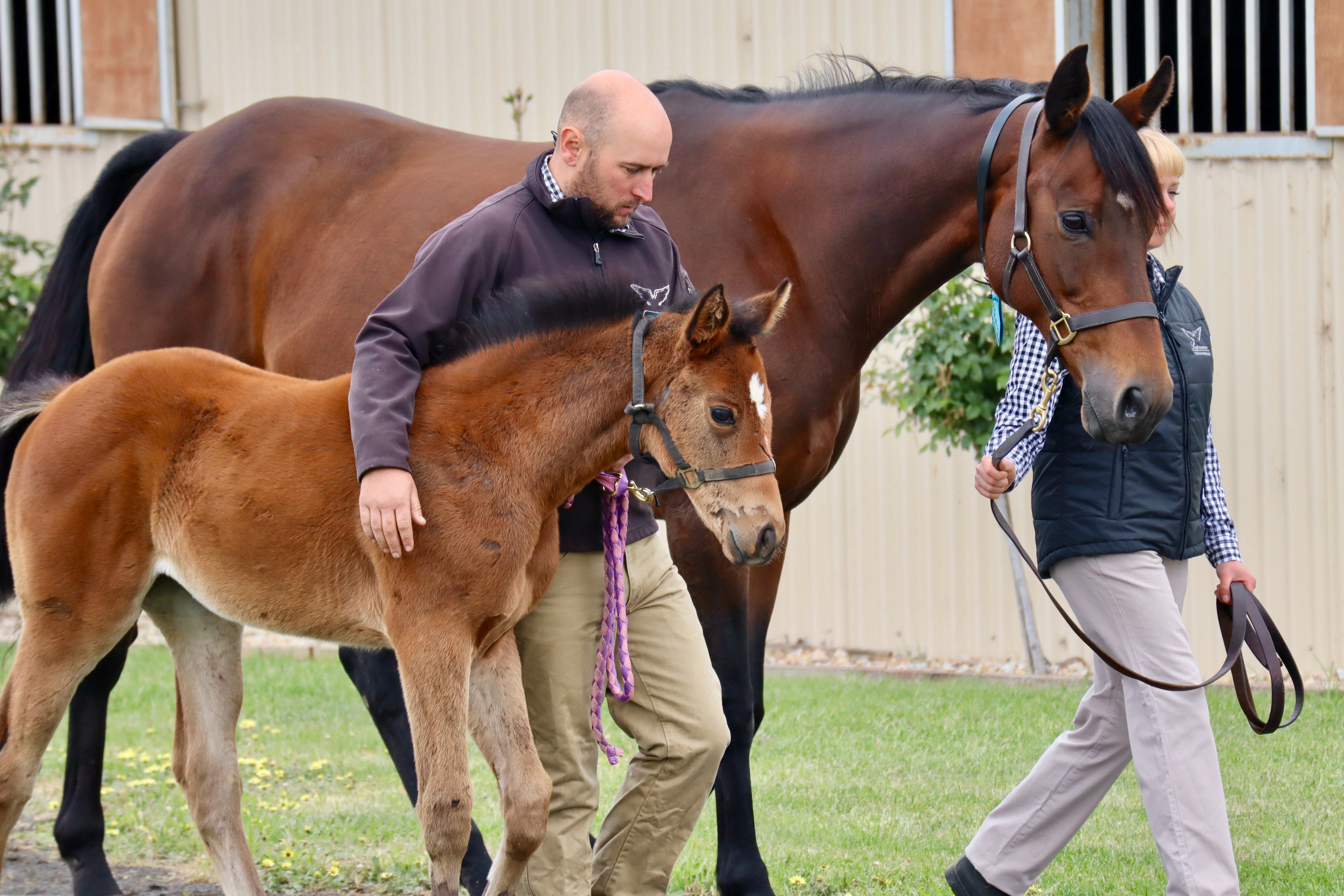 Mrs Kipling & her Impending filly (mare led by Katie McMorrow & filly by Chris Grayling) (TR Equine Solutions)
