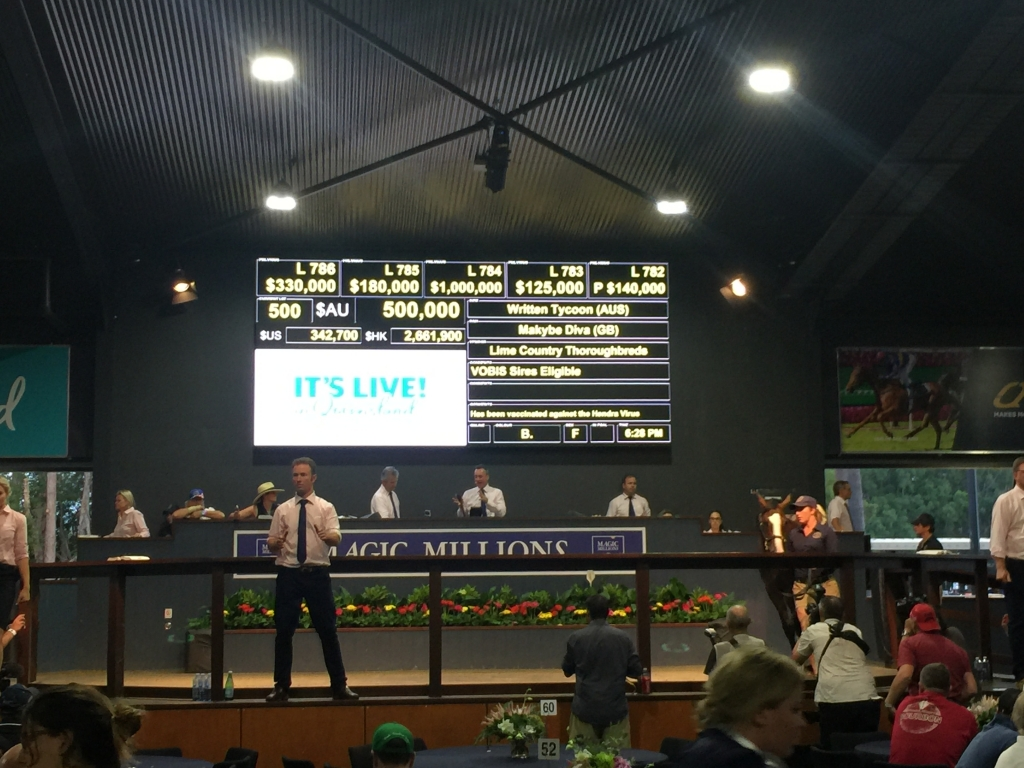 Lot 500 Written Tycoon x Makybe Diva's second last yearling went through the ring at the Magic Millions Gold Coast sale