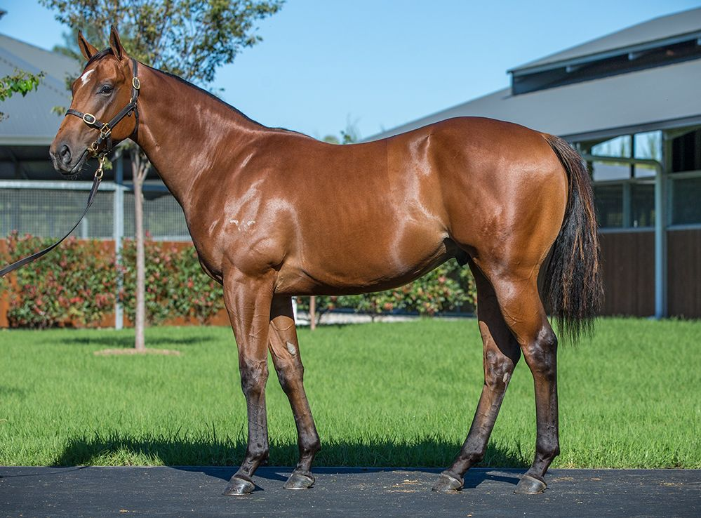 Lot 72, a son of Written Tycoon was knocked down to Coolmore for $900,000